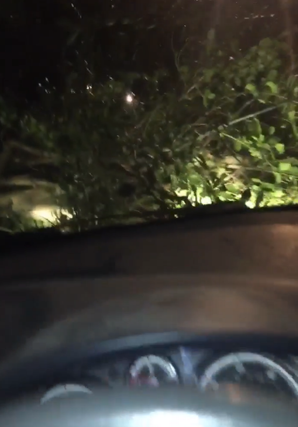 """""""Wind is so bad out there - nearly just got hit by a falling tree.  """"Outside Penpol School in Hayle. Luckily missed."""""""